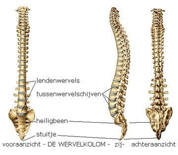 hernia in rug
